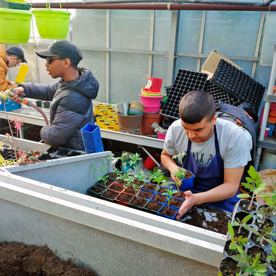 Atelier horticole à l'IMPro